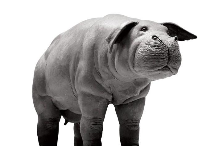 解决人类饥荒问题的超大型猪《OKJA》玉子– 实拍特效幕后